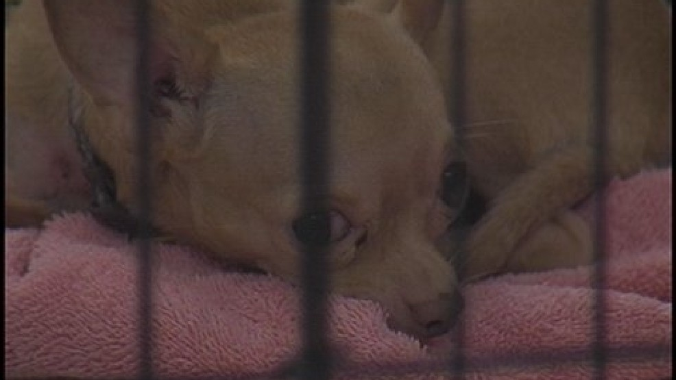Humane Society warns against buying pets from puppy mills | KATV