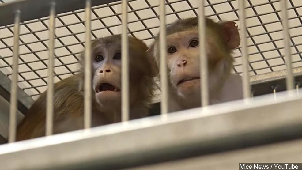 EPA announces plan to end all testing on animals, funding